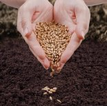 heart-hand-seed-earth