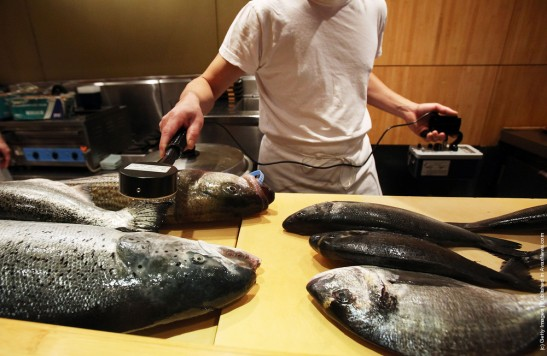 fish-tested-for-radiation