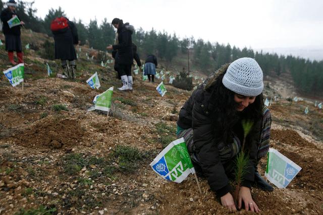 Jovens plantando árvores em Tubishvat. Foto por Flash90